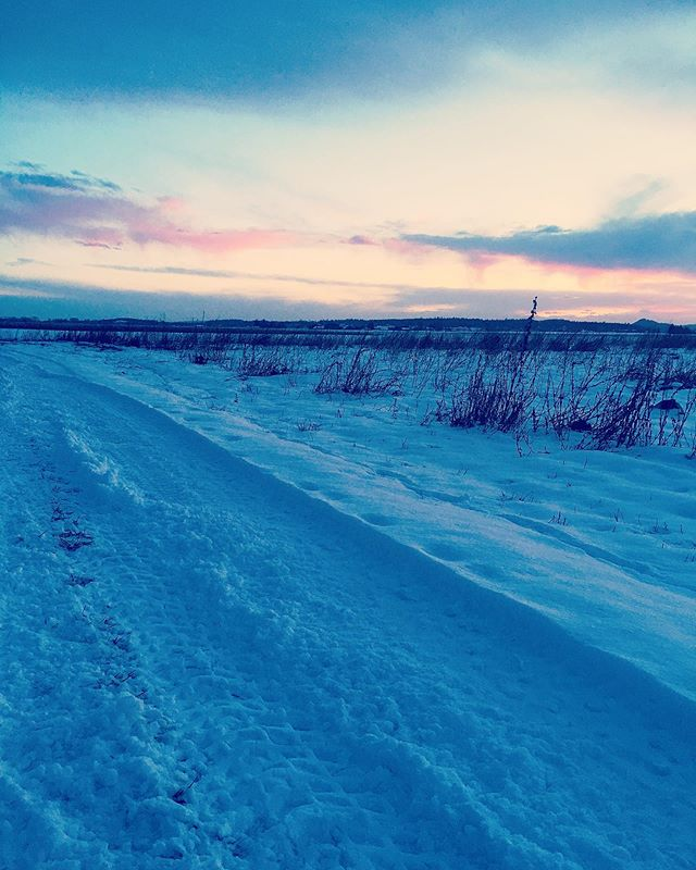 Cold #snow #pnw #skagitvalley