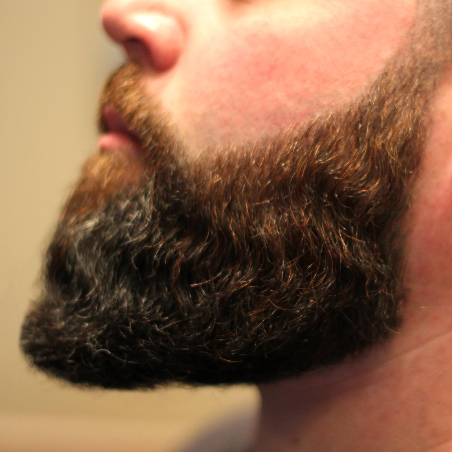 beard1.png