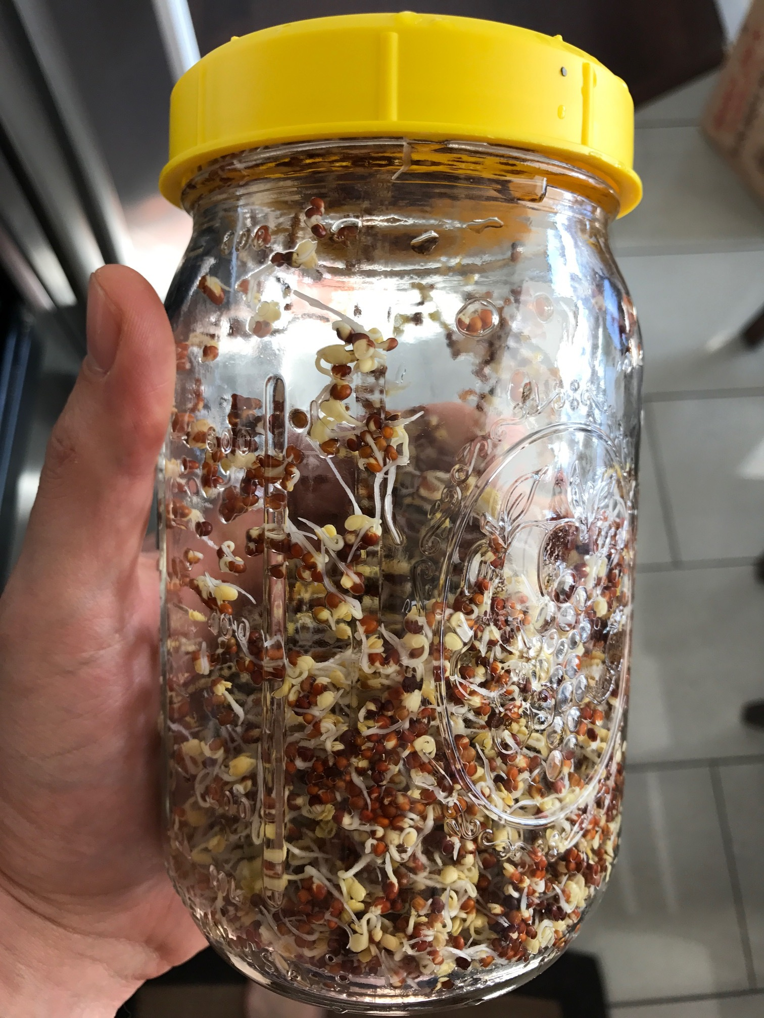 This is my jar! I use a 32-ounce wide mouth Ball mason jar, a sprouting lid (link to the left). These sprouts are about 2 days old (after activation).