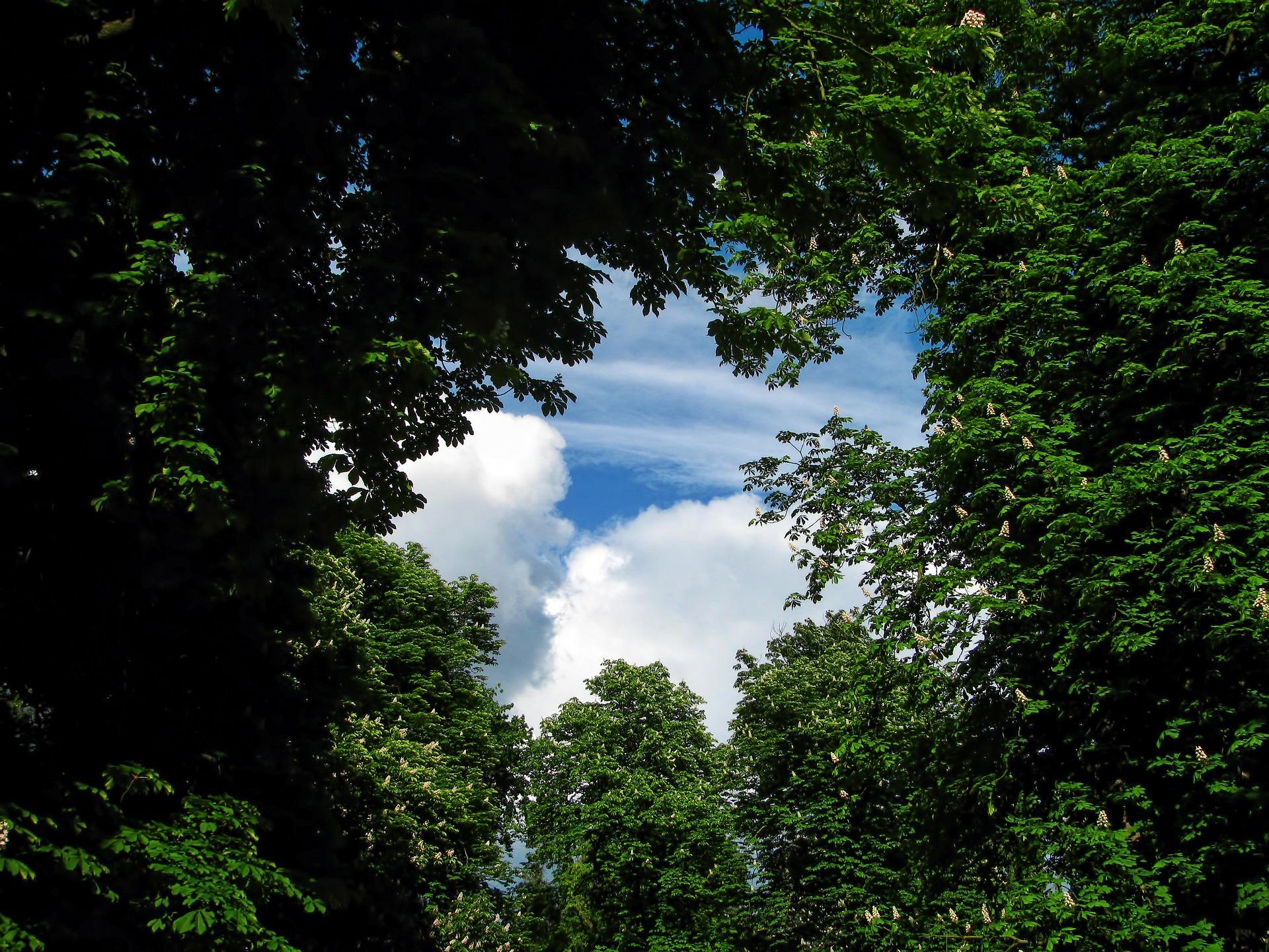 tree-220664_1920.jpg