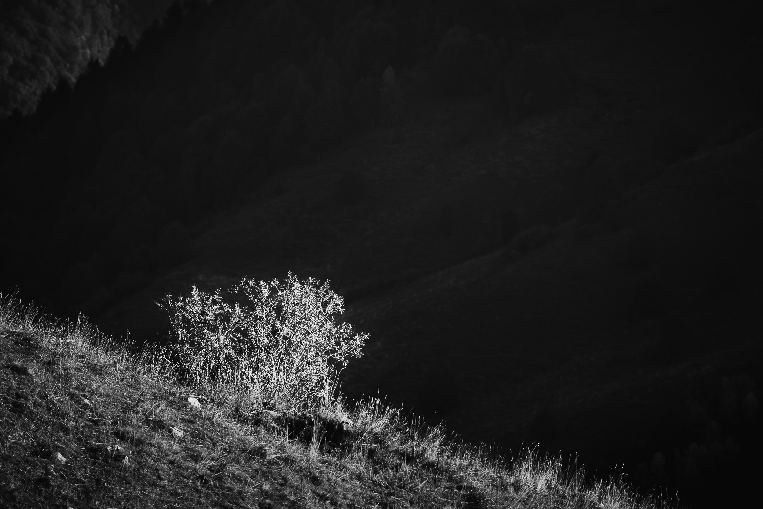 2018-10-20_Web_6084_Tree on a hill contrast with back shadow.jpg