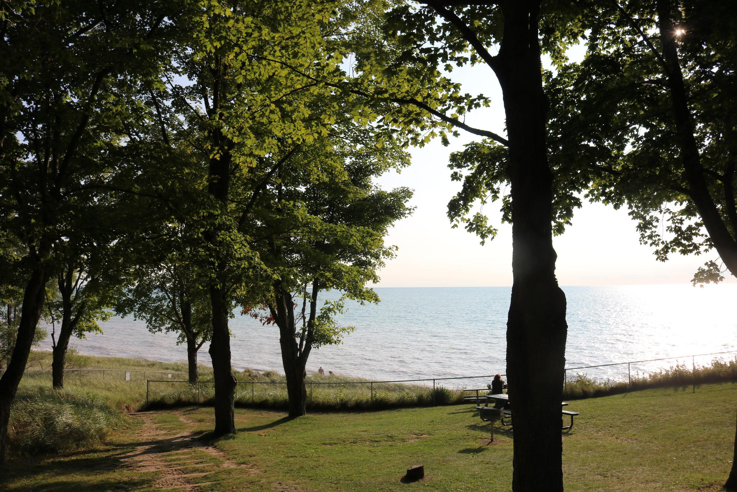 Trees overlook Lake Michigan