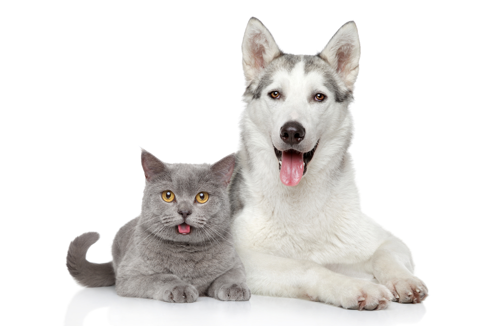 Pet Sitting and Medication by The Tail Trail of Bergen County New Jersey