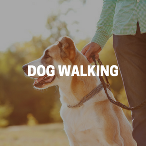 Dog Walking in Bergen County New Jersey