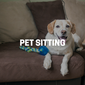 Pet Sitting in Bergen County New Jersey