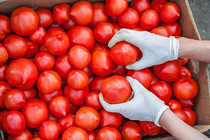 Jersey tomatoes rule supreme in KEEN Growth Capital's plans.