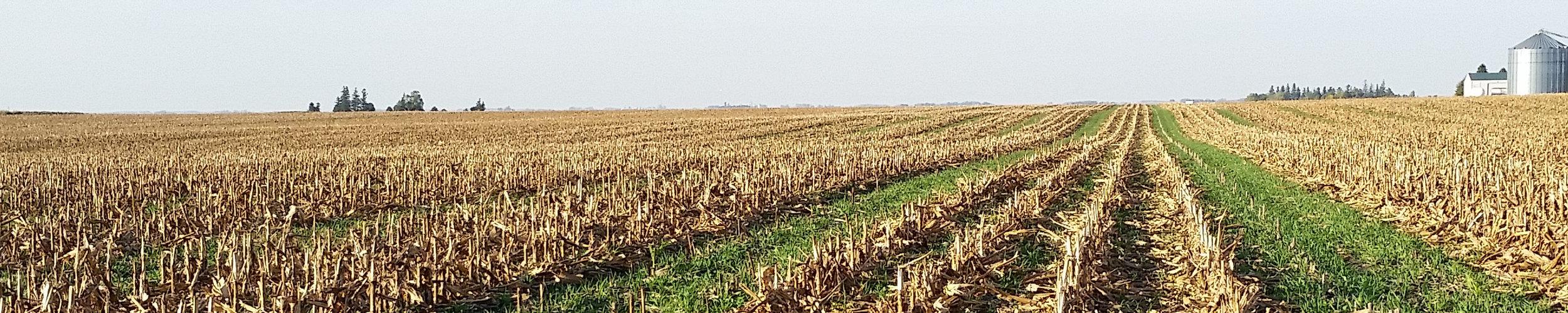 seedcorn_banner.jpg