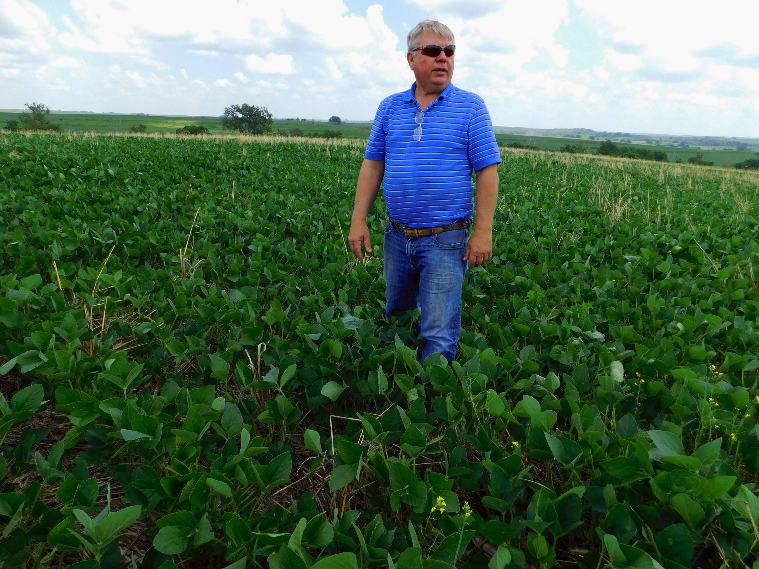 Montgomery County farmer, Gary Johnson, gazes over his soybean field with terminated cereal rye.