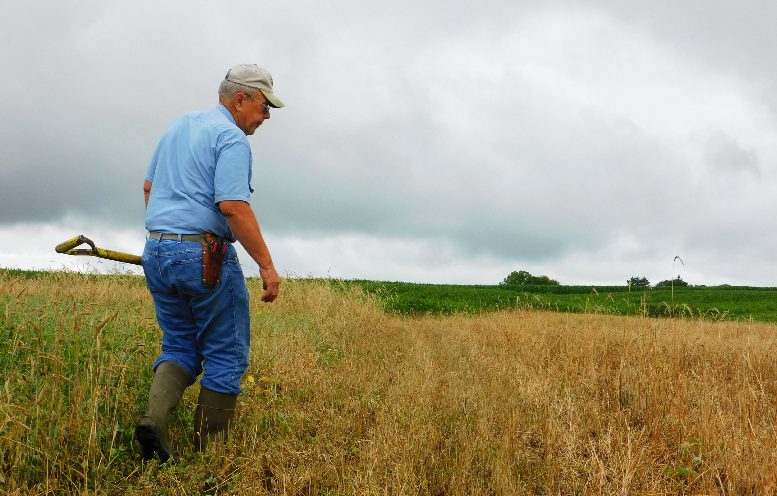 Paul Ackley, a Taylor County SWCD Commisioner, walks through his field.
