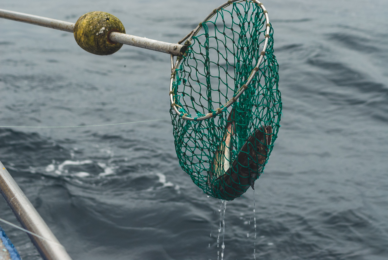 farelo-hake-fishing-net.jpg