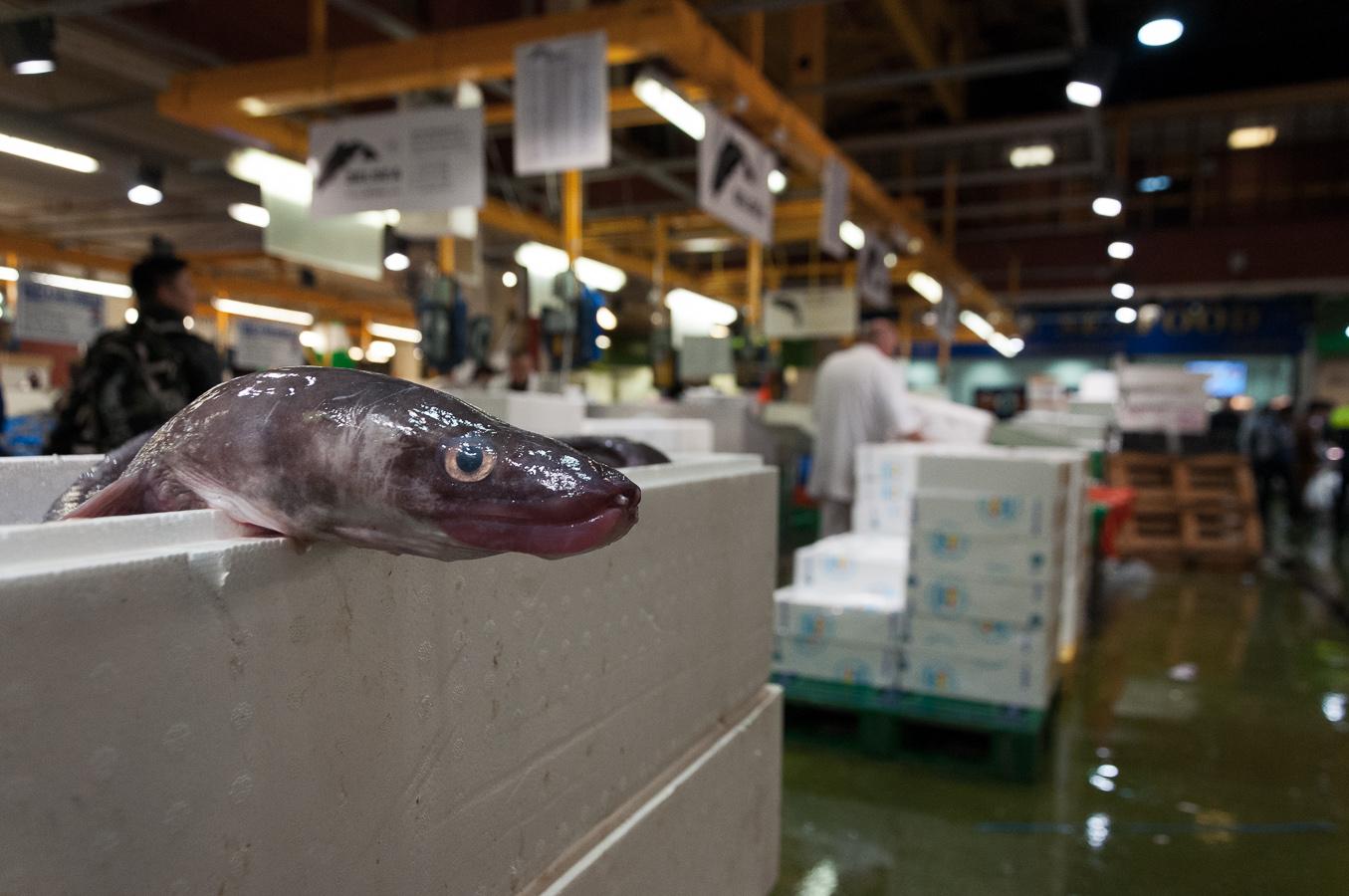 billings-gate-market-british-eel.jpg