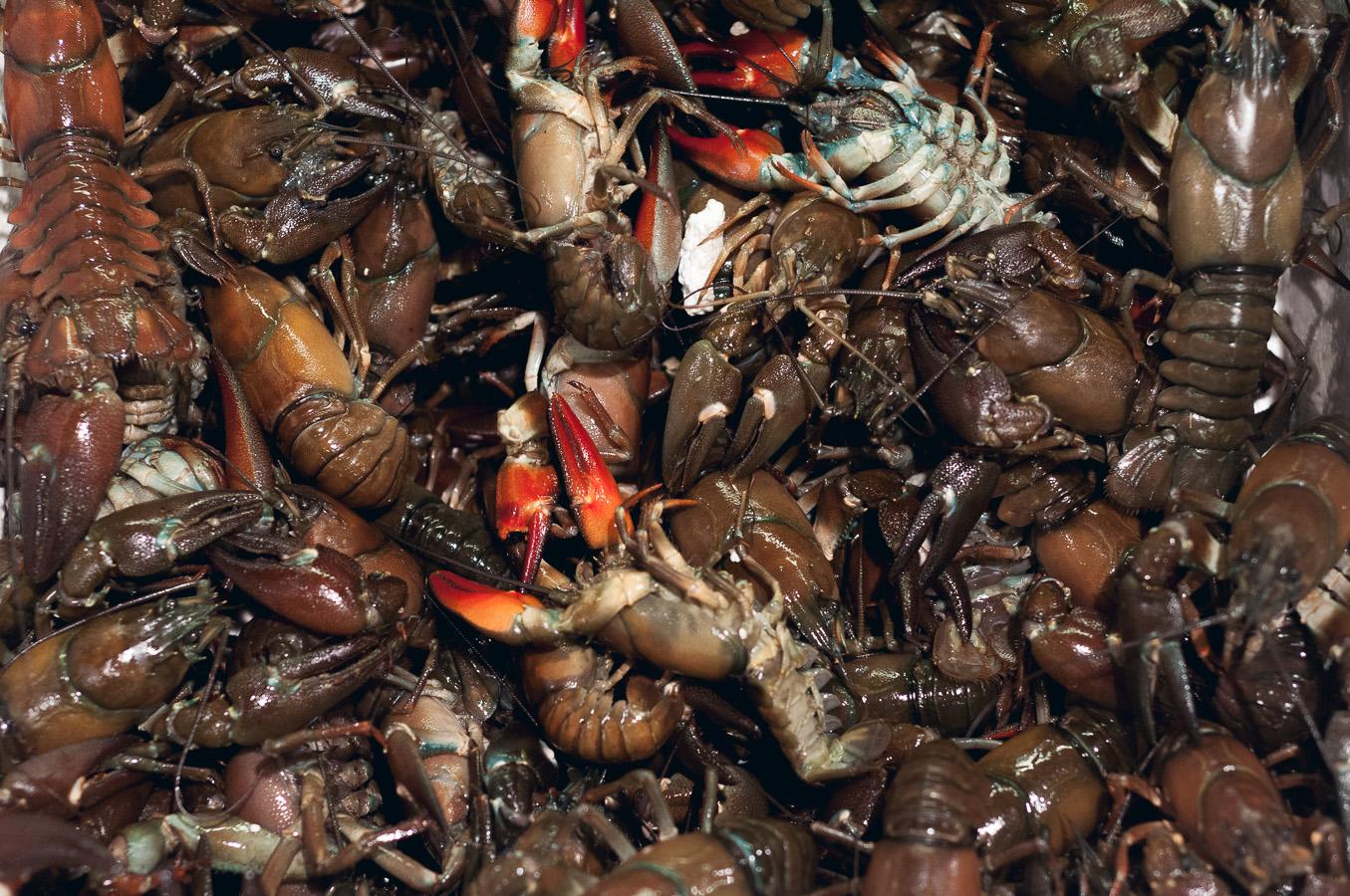 billings-gate-market-crayfish-bundle.jpg
