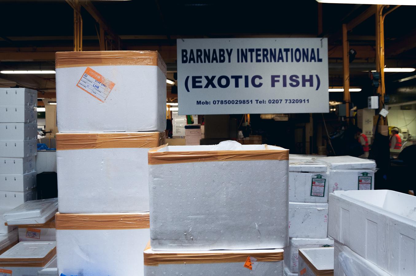 billings-gate-market-exotic-fish-stall.jpg