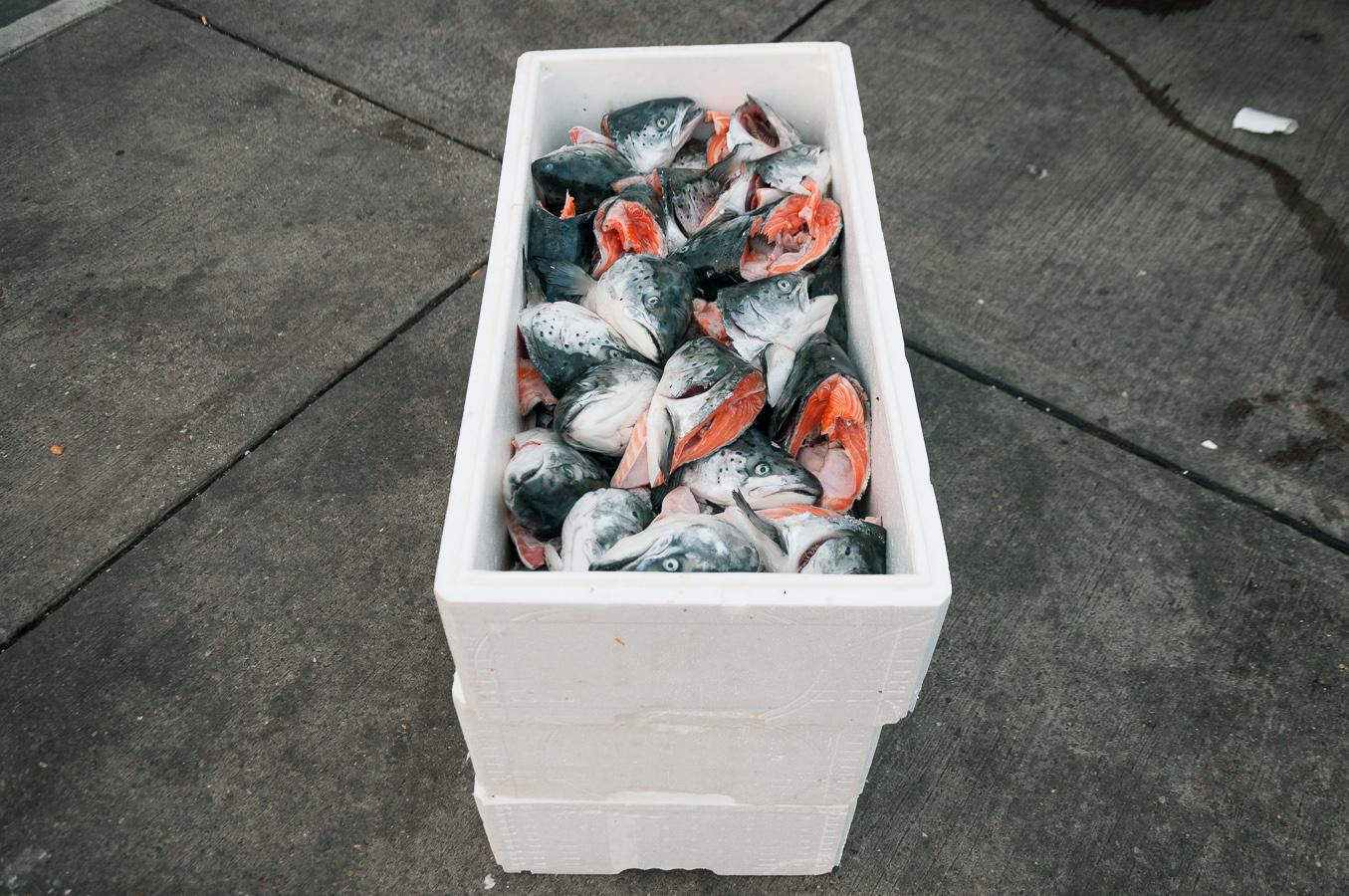 billings-gate-market-salmon-heads.jpg