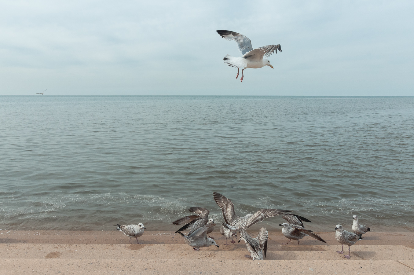 blackpool-seagulls-feed.jpg