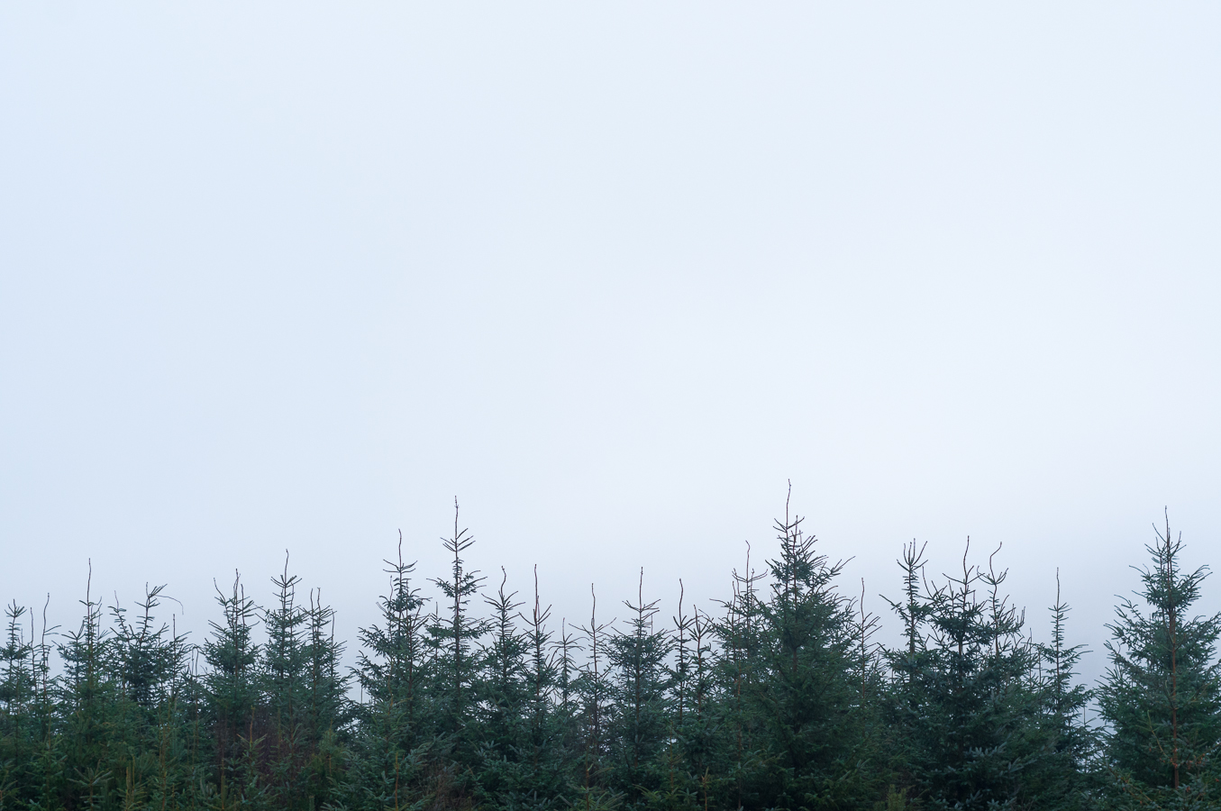 christmas-trees-peak-district.jpg