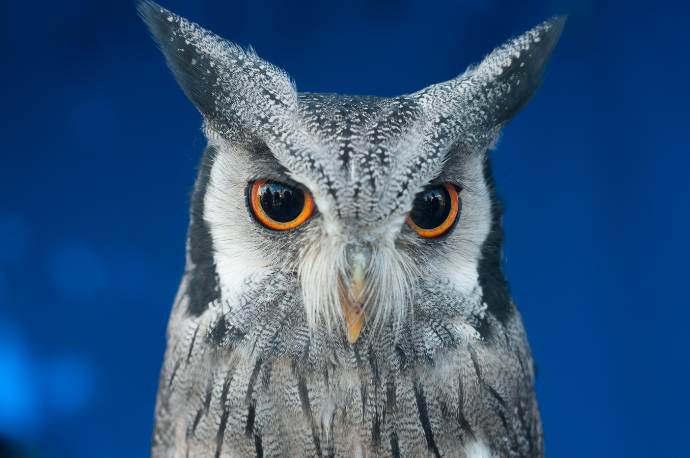 owl-eyes-portrait.jpg