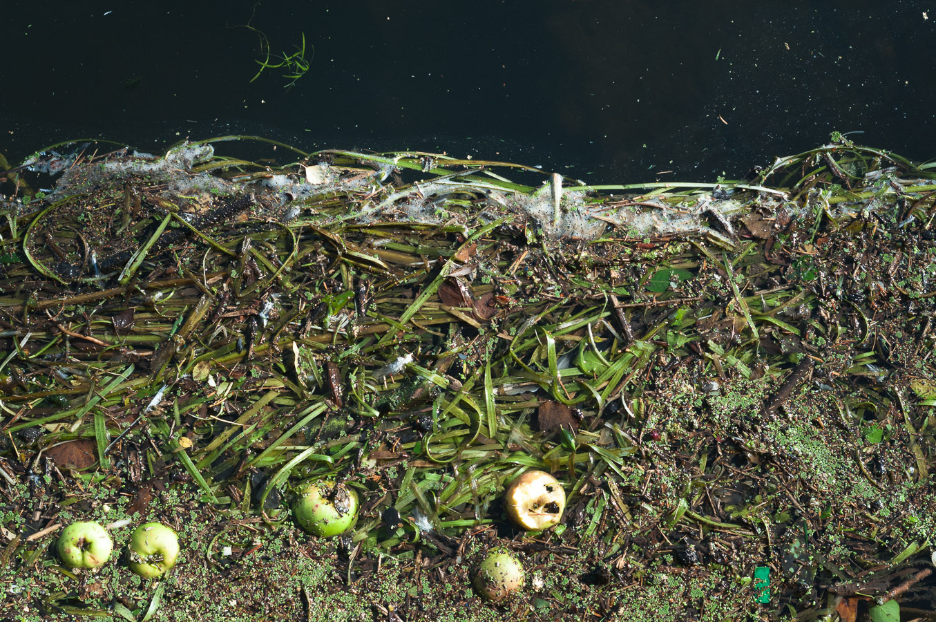 river-weeds-apple-space.jpg