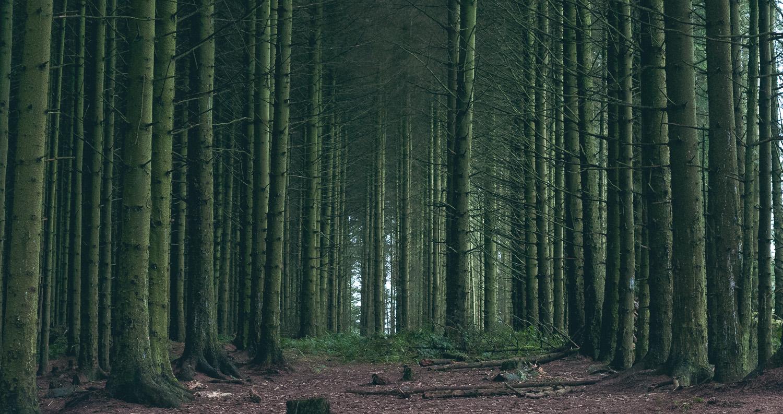landscape-tree-photography.jpg