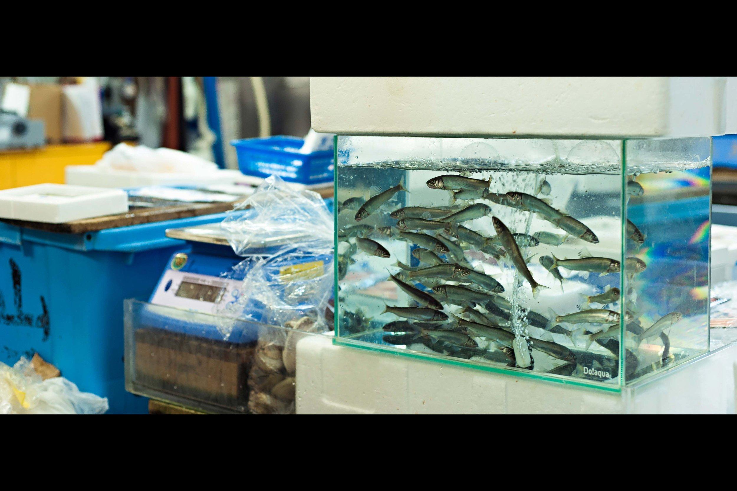baby-salmon-tank-fish-market.jpg