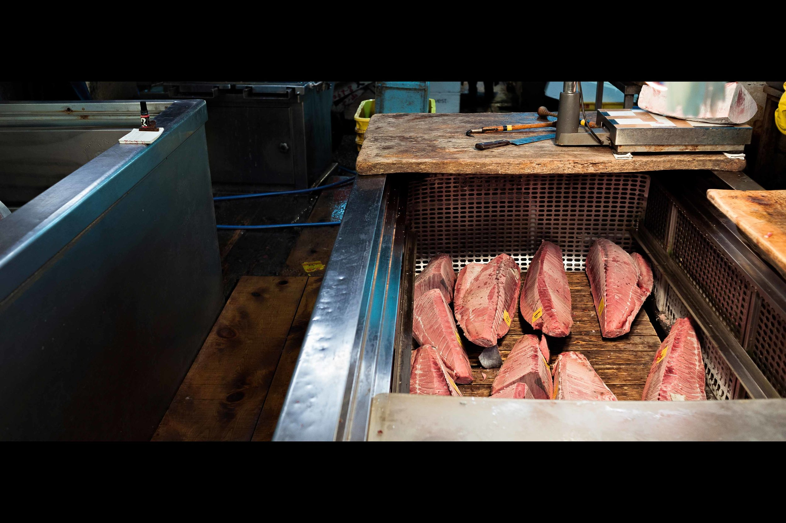 frozen-tuna-fillets.jpg