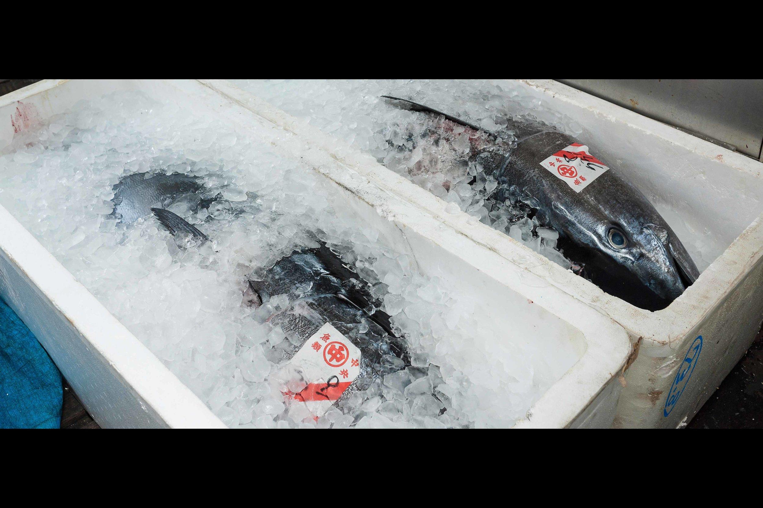 tokyo-fish-market-tuna-auction.jpg