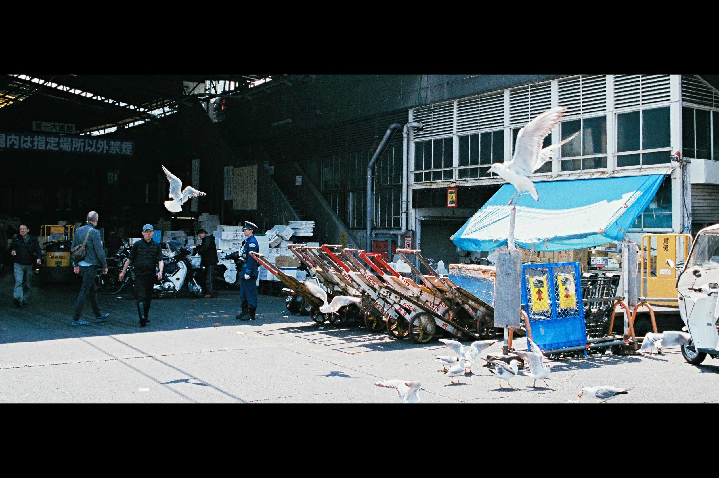 police-sea-gulls-tsukiji.jpg