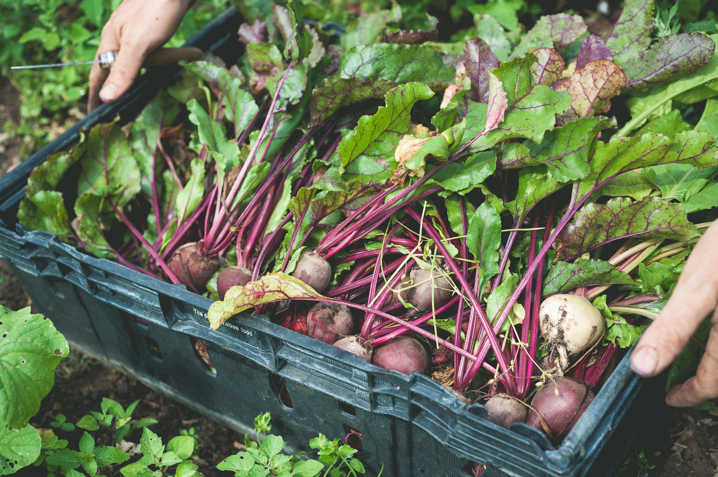 fresh-beat-route-harvest.jpg