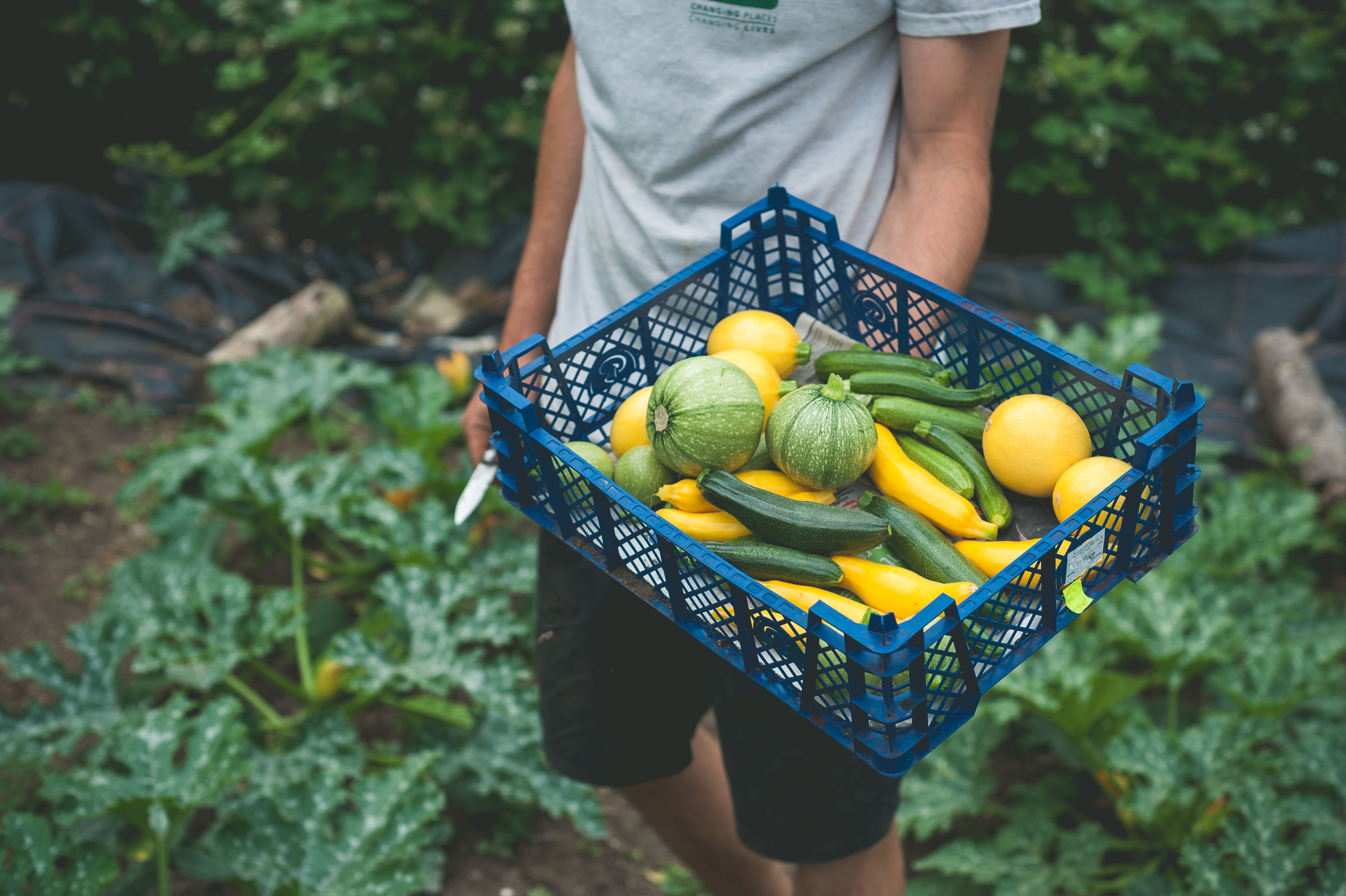 keats-organics-vegetable-harvest.jpg