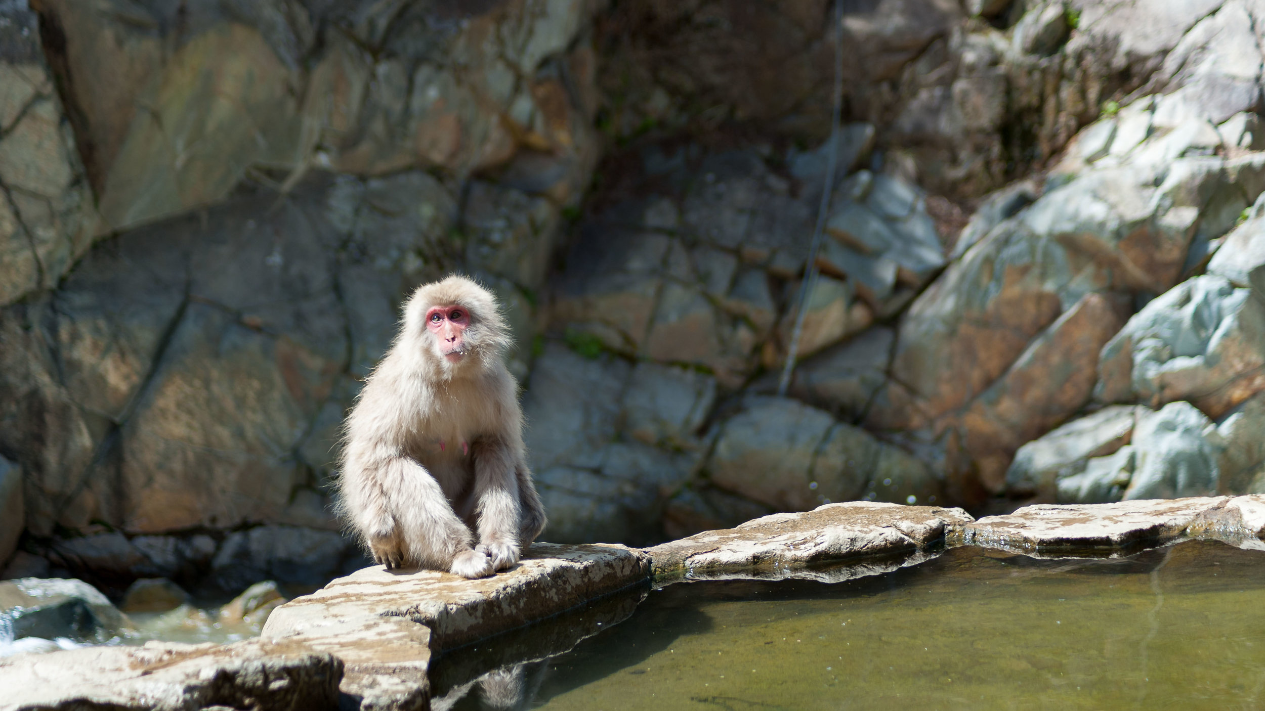 yudanaka-snow-monkey-japan.jpg