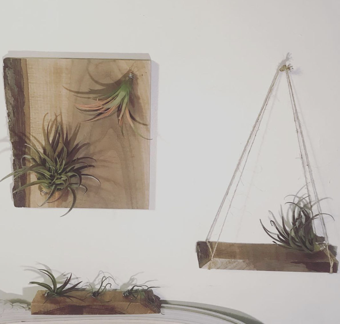 Air Plant Wall & Table Planters