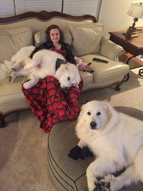 5 Things To Know About Great Pyrenees