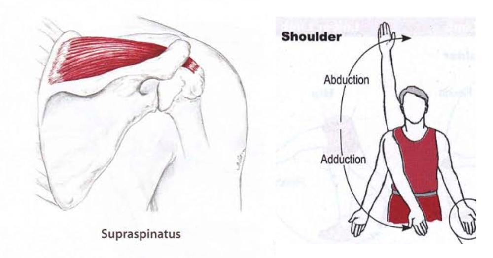Shoulder1.png