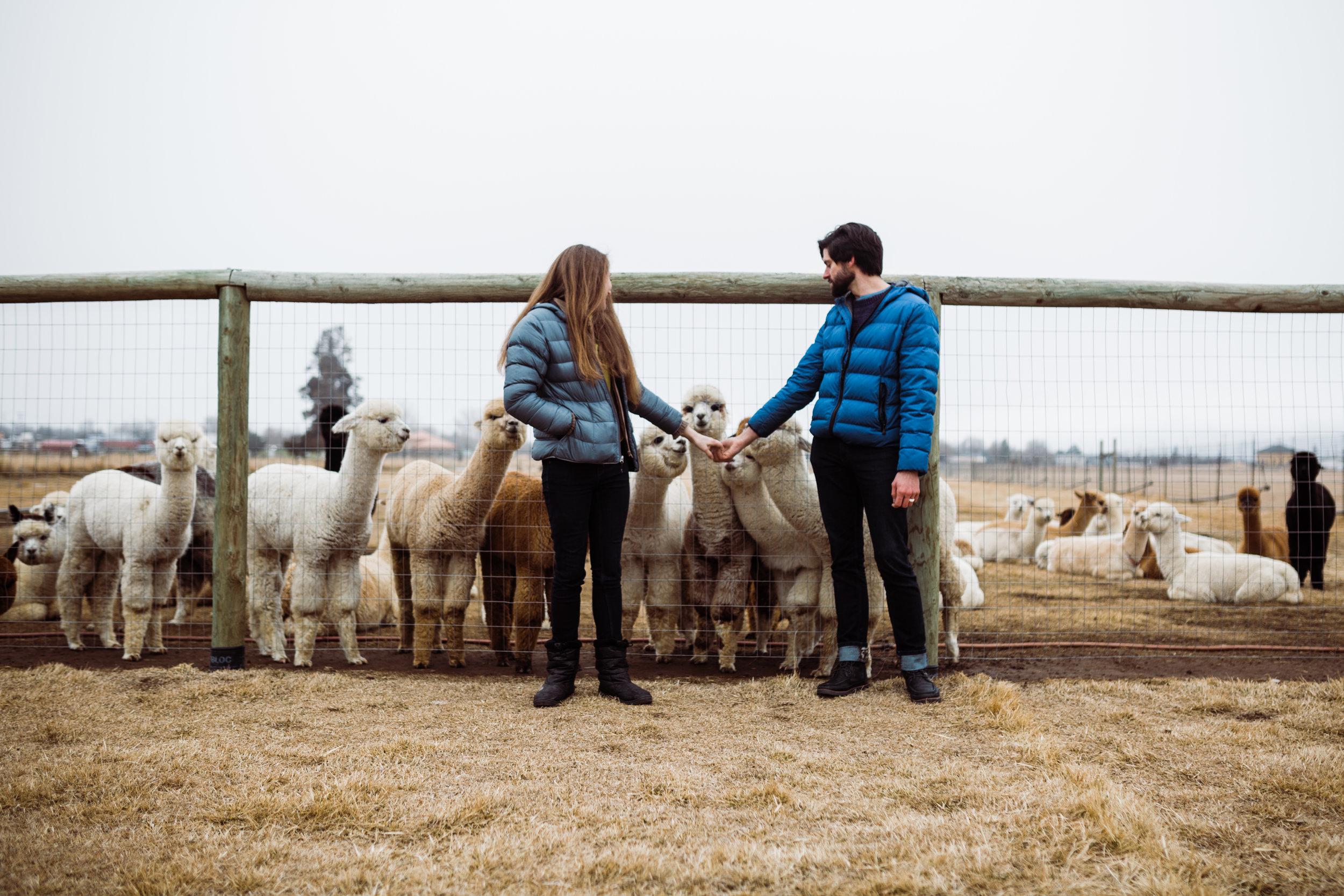 Couple_Alpaca_Farm_couple_photos.jpg