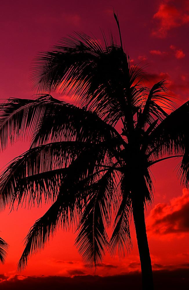 20090223_Hawaii_001.jpg