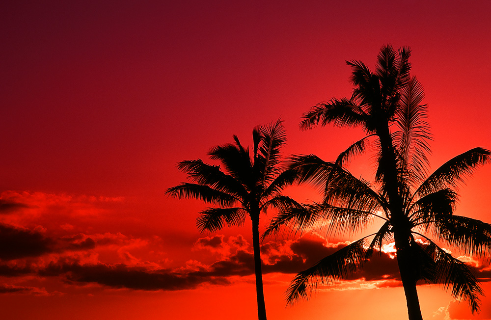 20090223_Hawaii_008.jpg