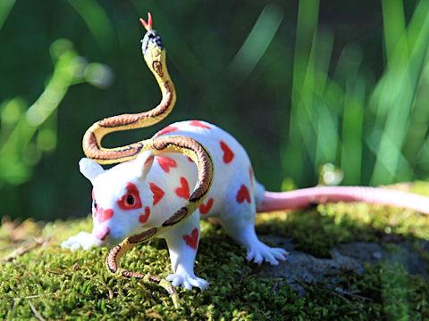 photo by Steven Fritz. Rat courtesy of Ms. Al. Snake of unknown origin, presumed deadly.