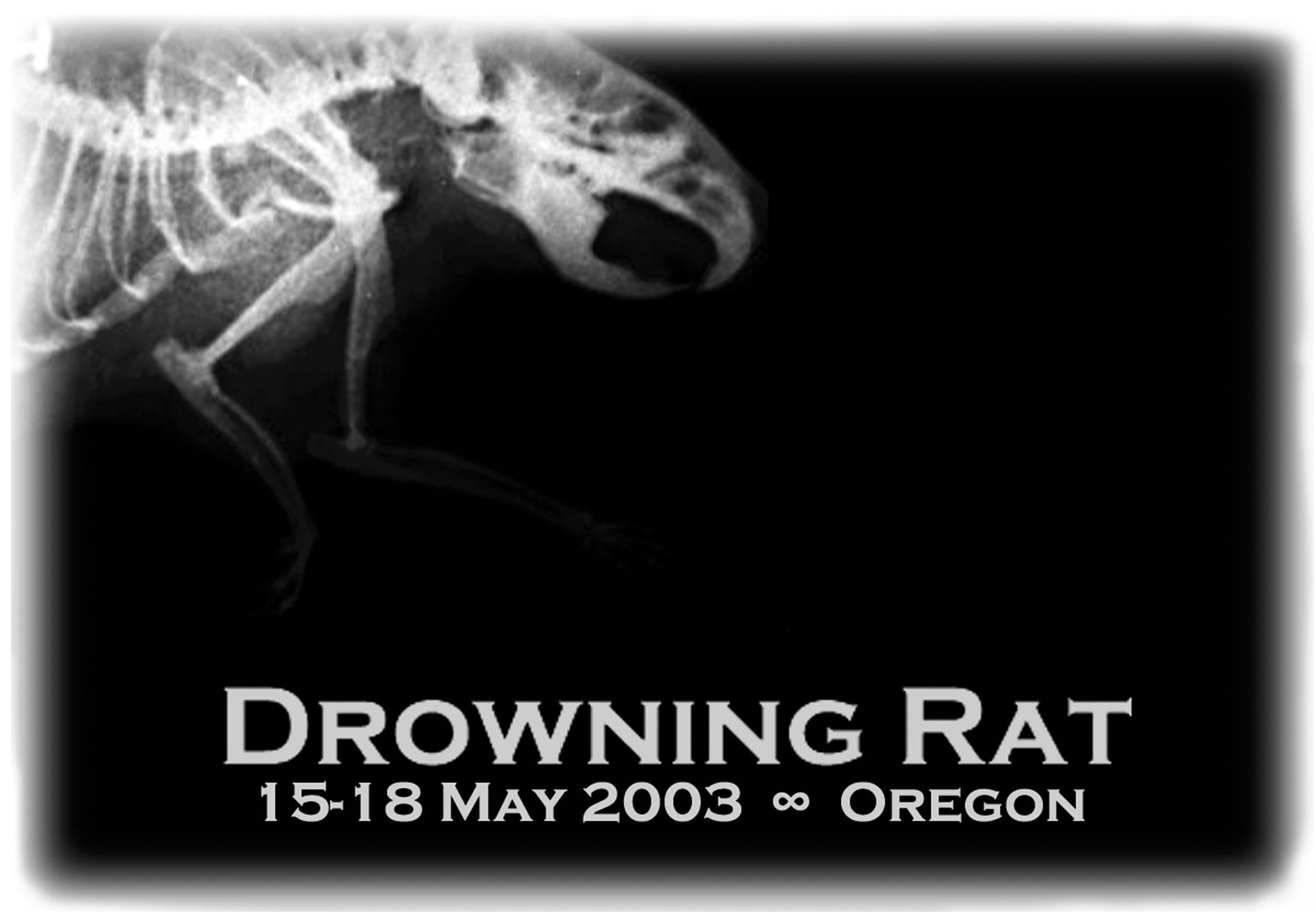 drowningrat-15.jpg