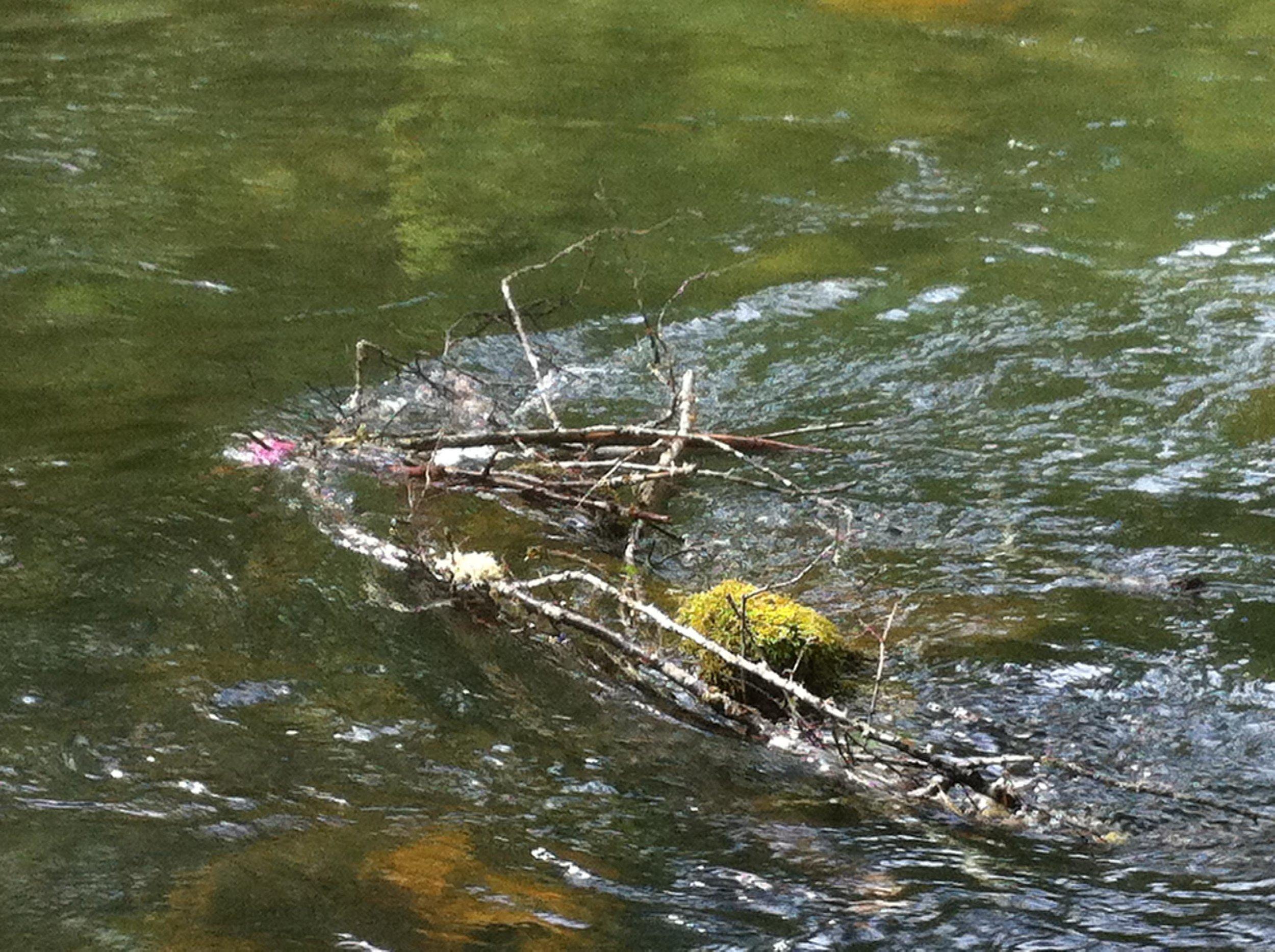 drowningrat-206.jpg
