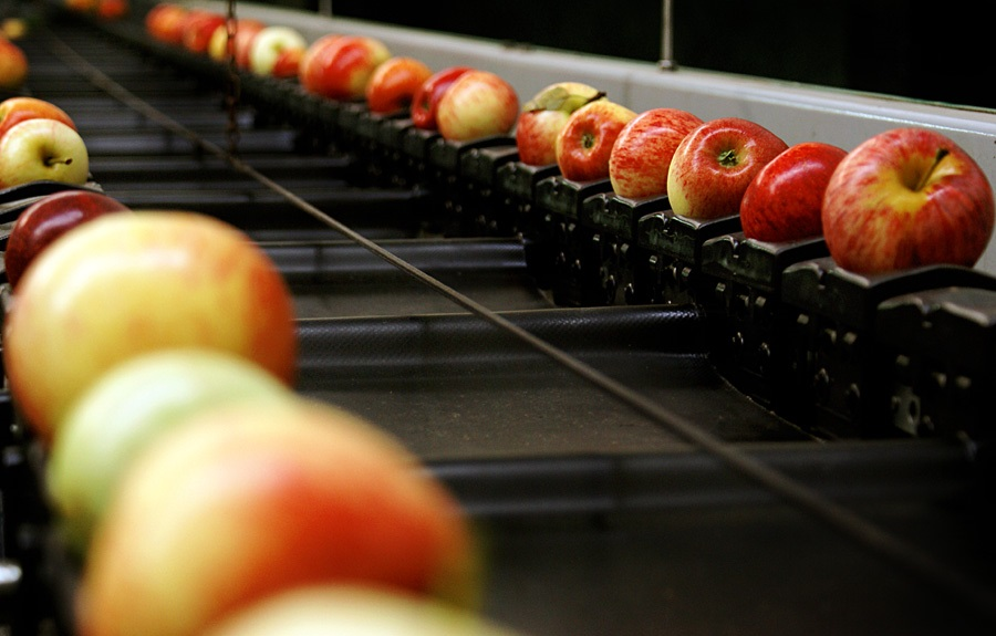 Day_4_-_Apples_Factory[1].jpg