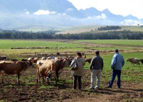 South-Africa-1-Farm-280x200.jpg