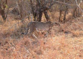 South-Africa-6-Leopard-280x200.jpg