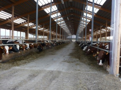Dairy Barn - Sweden.jpg
