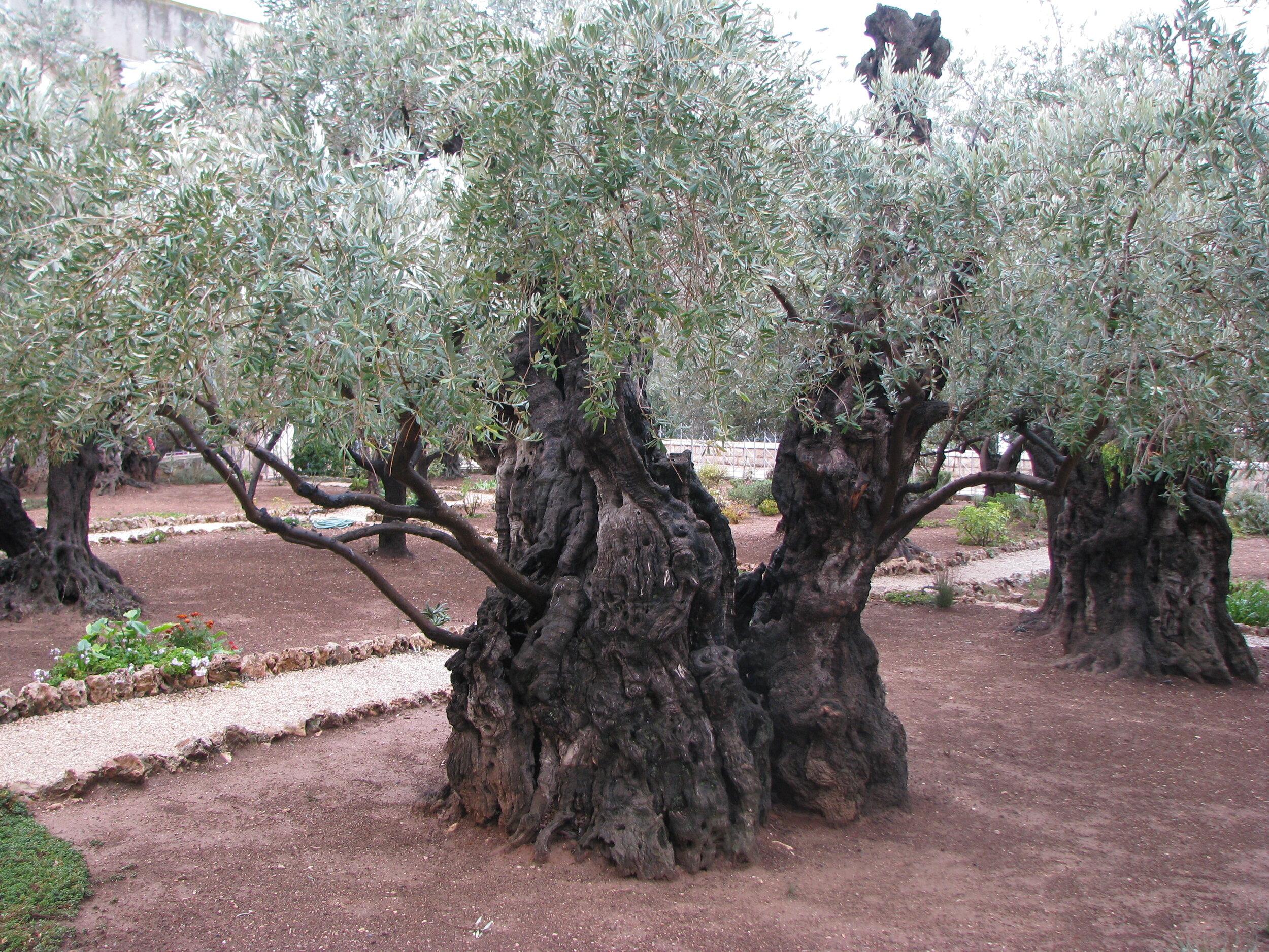 Egypt Jordan Israel Nov 2011 429.JPG