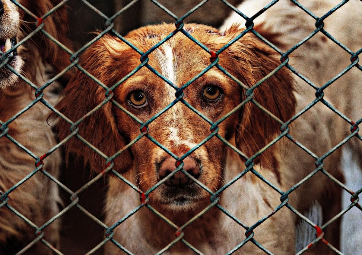 animal_welfare_dog_imprisoned_animal_shelter_sad_animal_rescue_dog_look_help-833048.jpg!d.jpeg