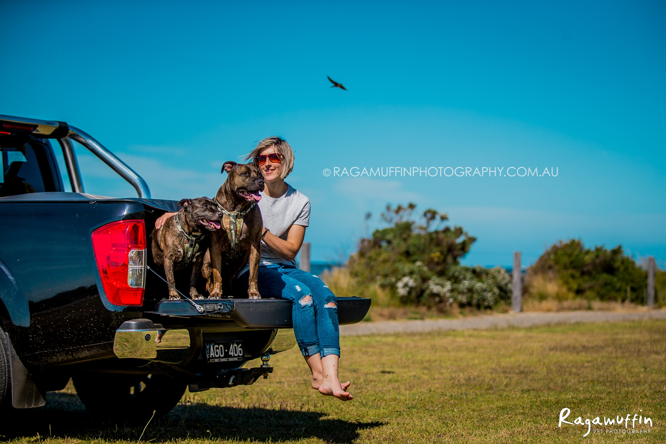 Billy and Diesel, Staffy dogs in Portarlington