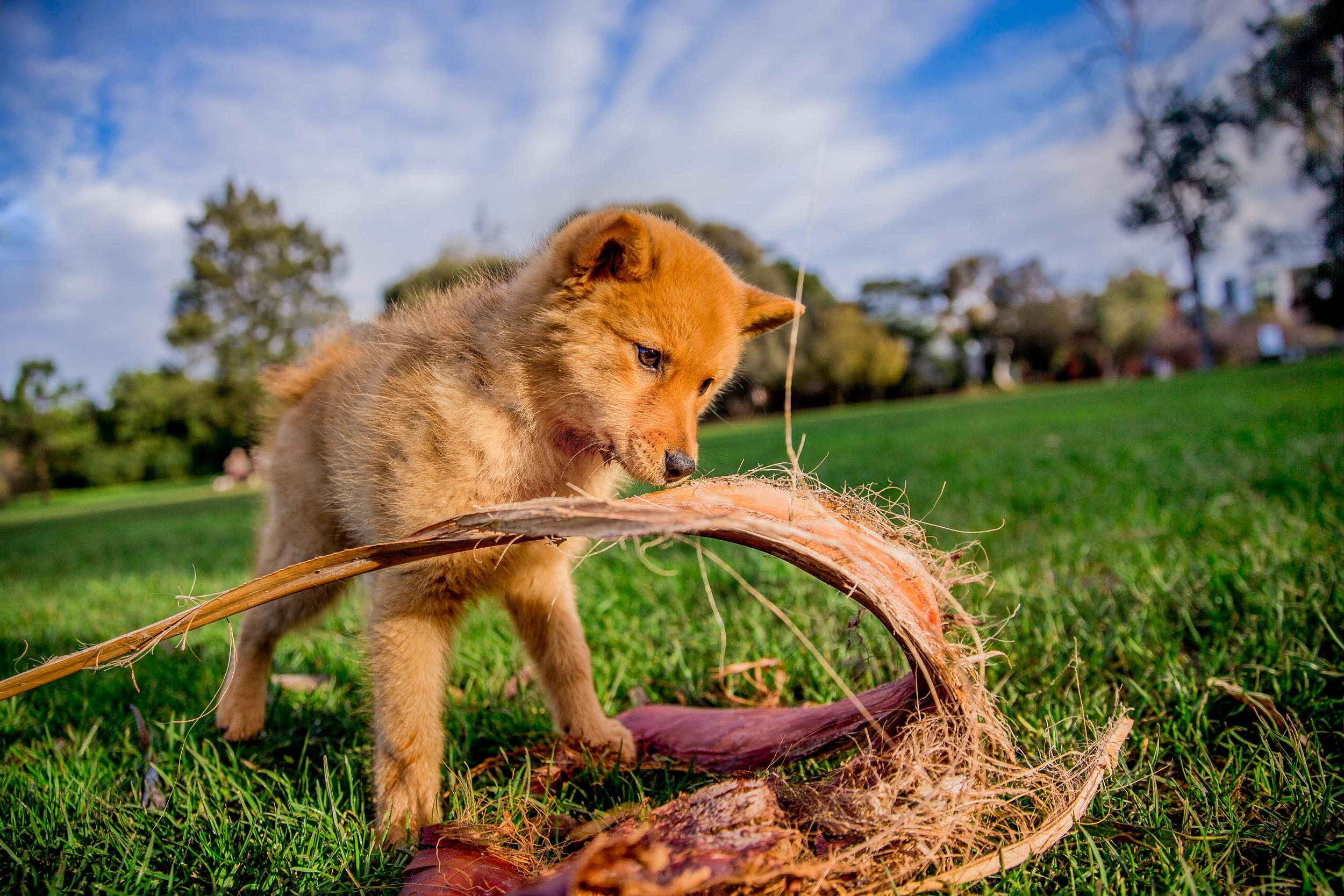 foxe-ragamuffin-June_16(15)-edit-web.jpg