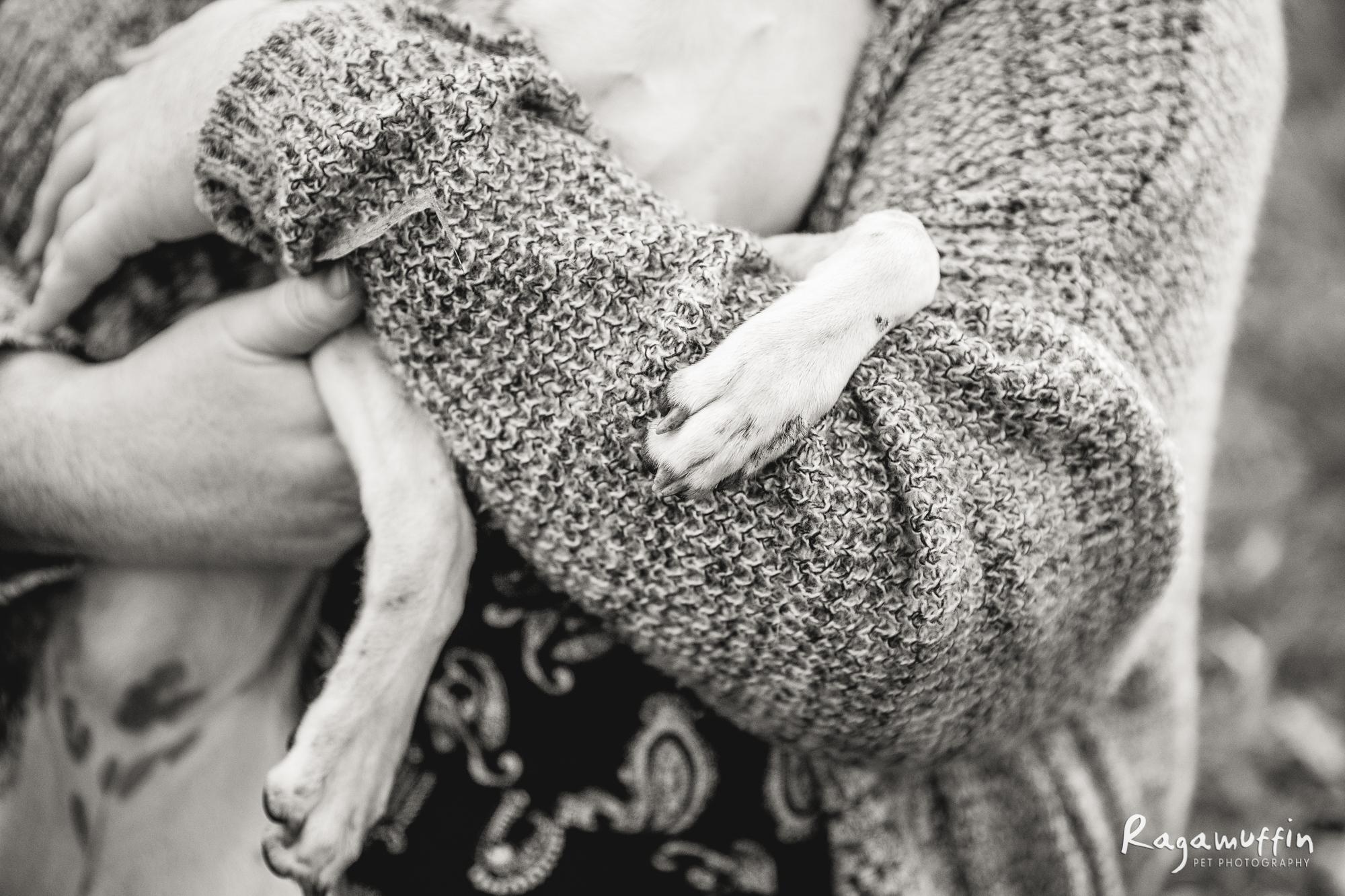 dog-photography-melbourne