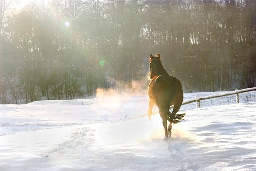 pferd schnee.jpg