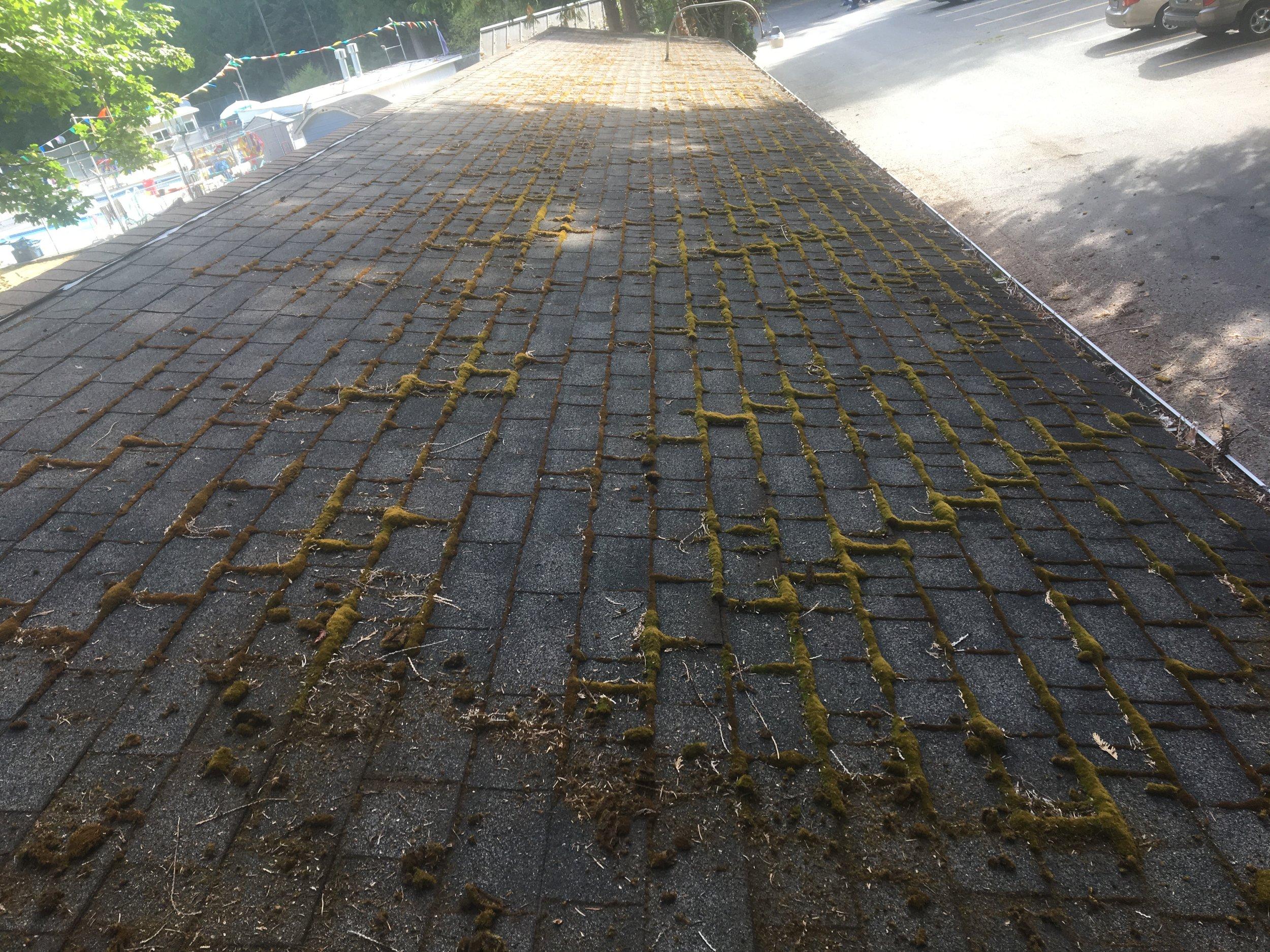 roof_6_before.JPG